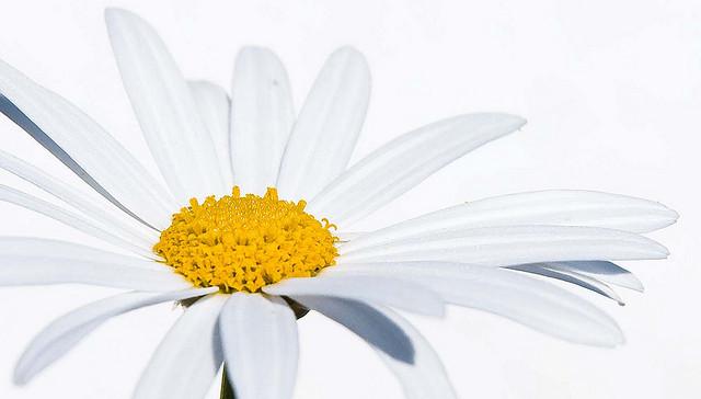 high key photograph of a flower